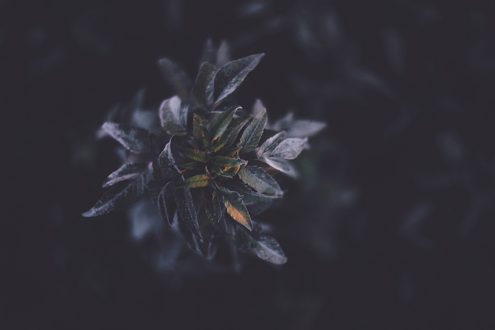 Plant in the Darkness
