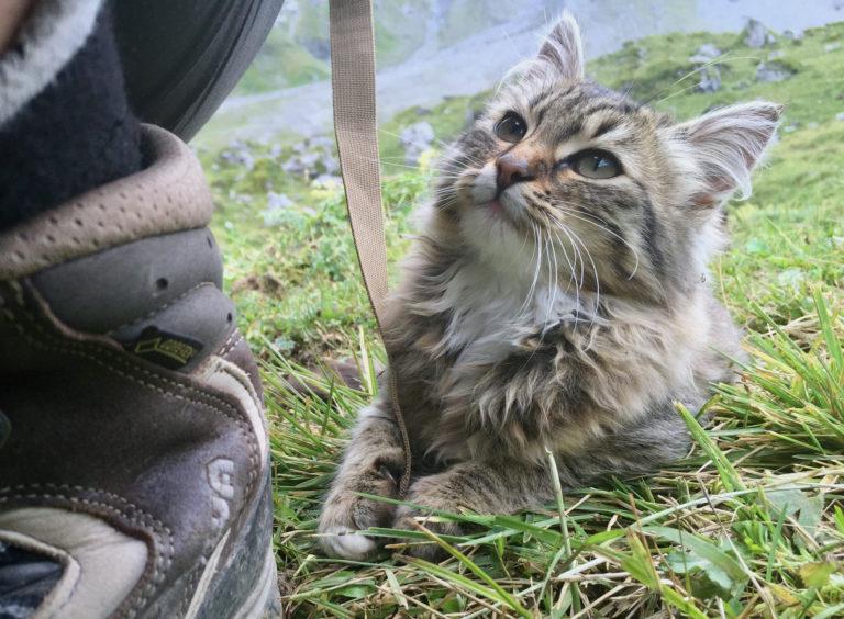 Kätzchen im Gras spielt mit einem Band, im Vordergrund halb sichtbar ein Wanderschuh